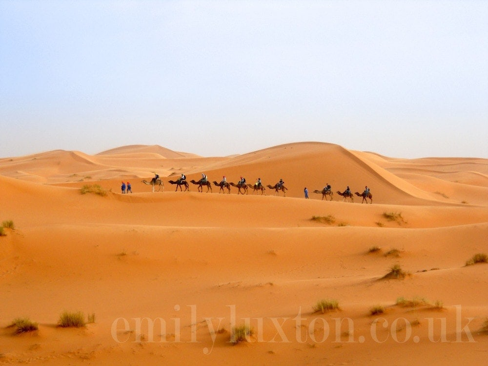 A caravan of camels in the Sahara desert