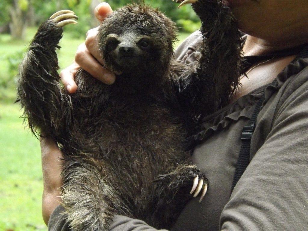 Amazon - Animal Rescue Centre