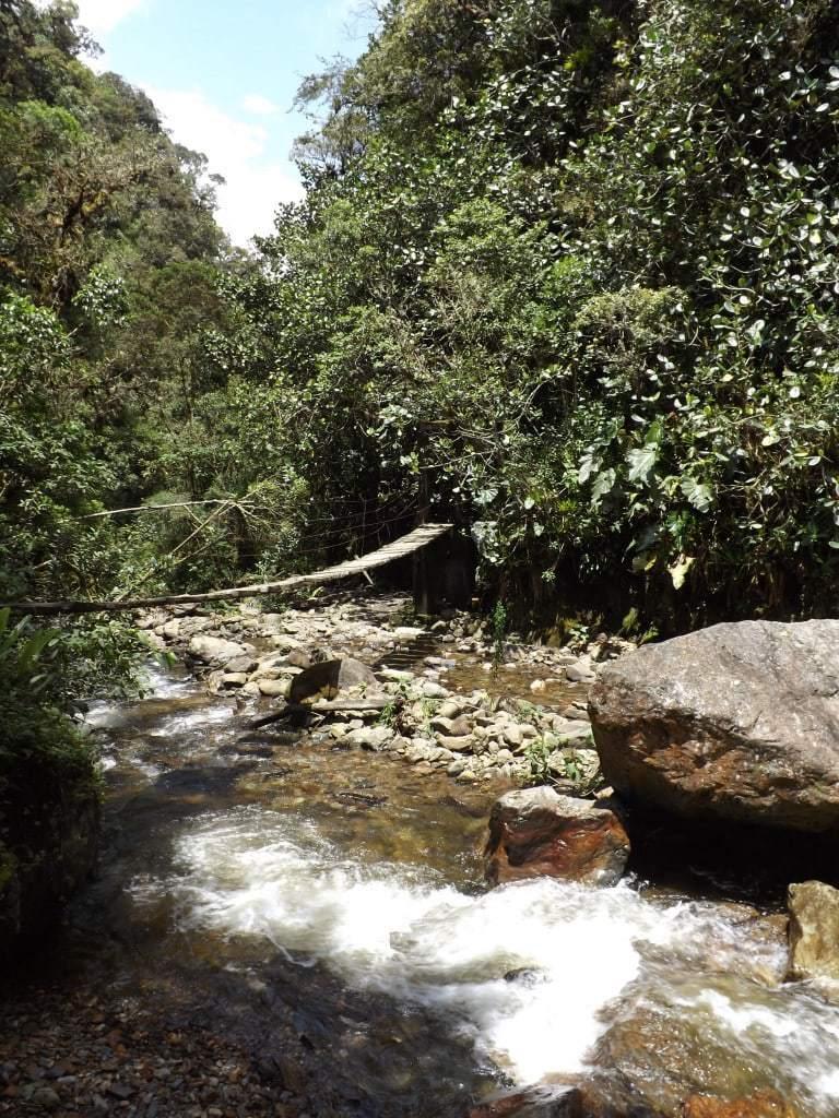 Hiking the Valle de Cocora in Salento
