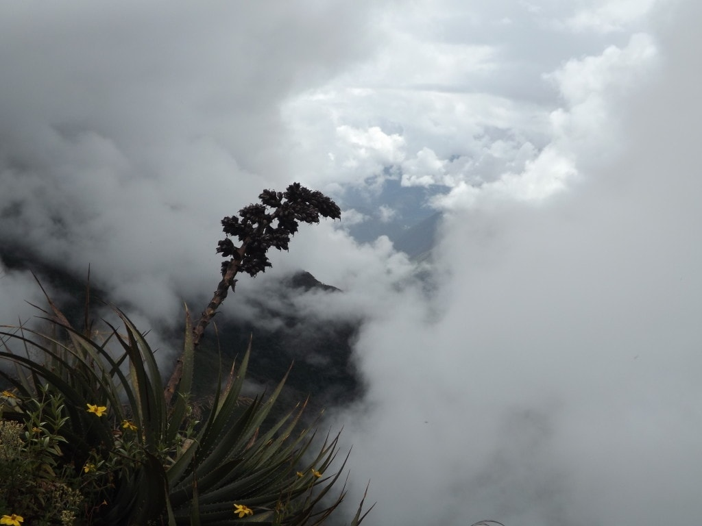 Inca Jungle Trek Day One