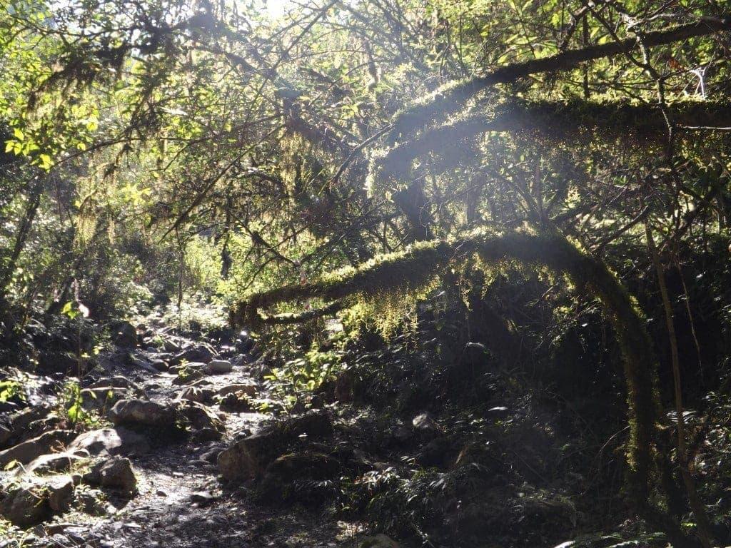 San Lorenzo Hike
