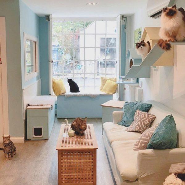 Cat Cafe Edinburgh