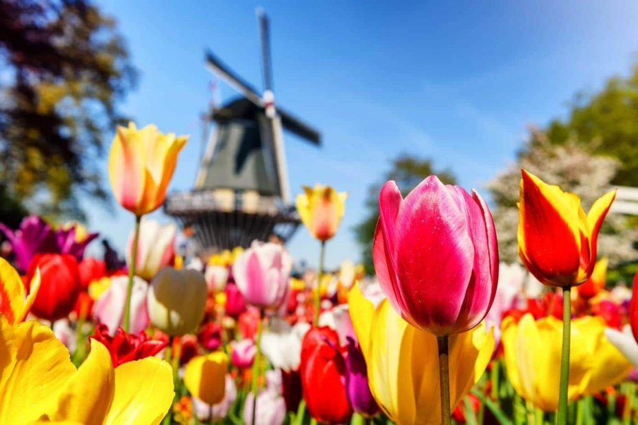 Keukenhof Gardens is one of the best places in the Netherlands to see tulips