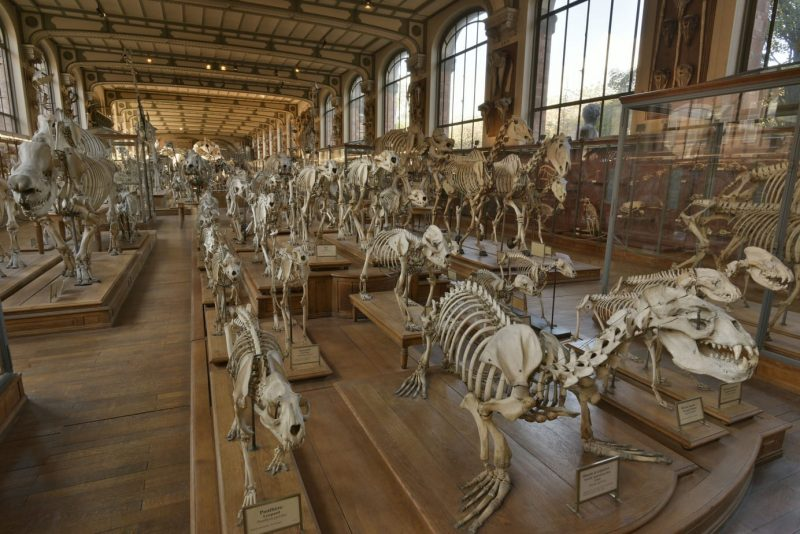 unusual things to do in Paris - Gallery of Anatomy