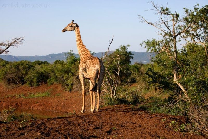 Nine Reasons to Visit Thanda Safari KwaZulu-Natal
