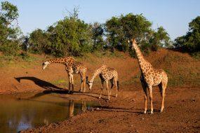 Nine Reasons to Visit Thanda Safari KwaZulu-Natal
