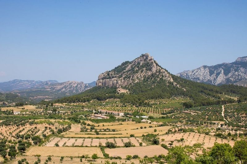 olive oil tourism catalonia