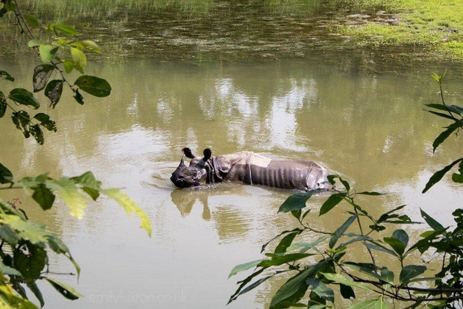 Chitwan Jungle Safari with Meghauli Serai