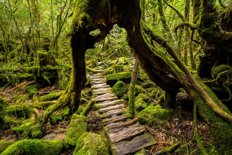 Yakushima Island Japan Off the Beaten Path