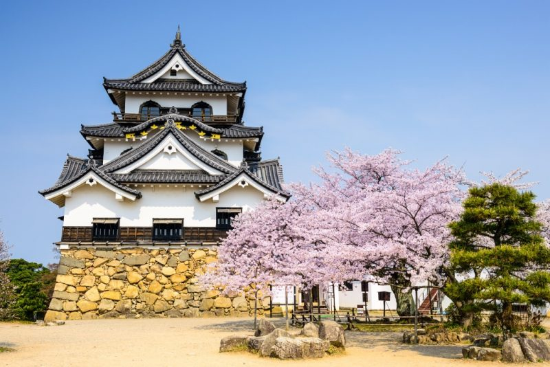 Japan Castle with cherry blossoms