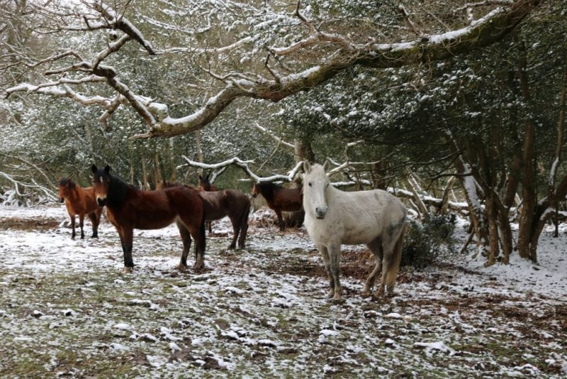 things to do in the New Forest in winter