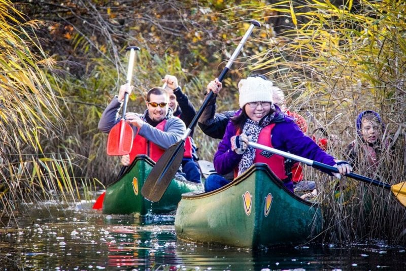 new forest winter activities