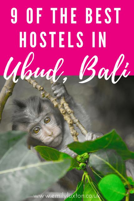 9 of the Best Hostels in Ubud Bali