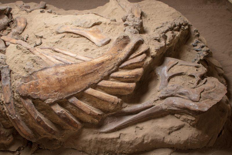 fossils in alberta canada
