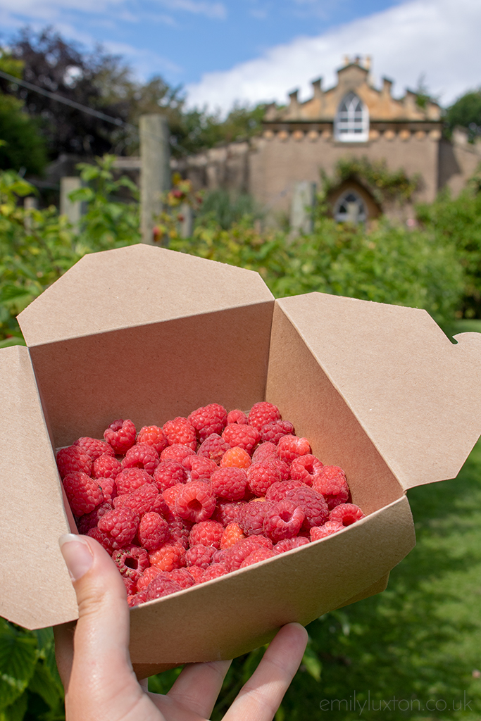 Rasberries in punnet at Raby Castle