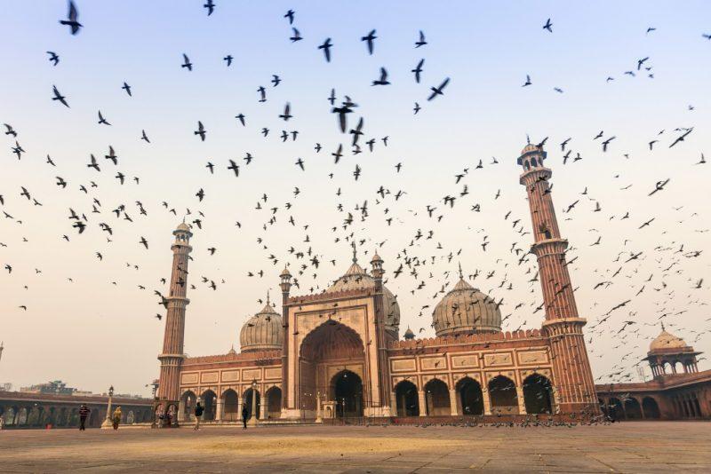 Jama Masjid with birds flocking