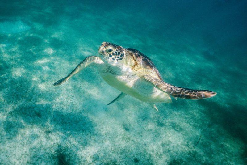 Cancun day trips - Akumal