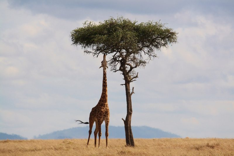 Is Kenya Expensive for Tourists?