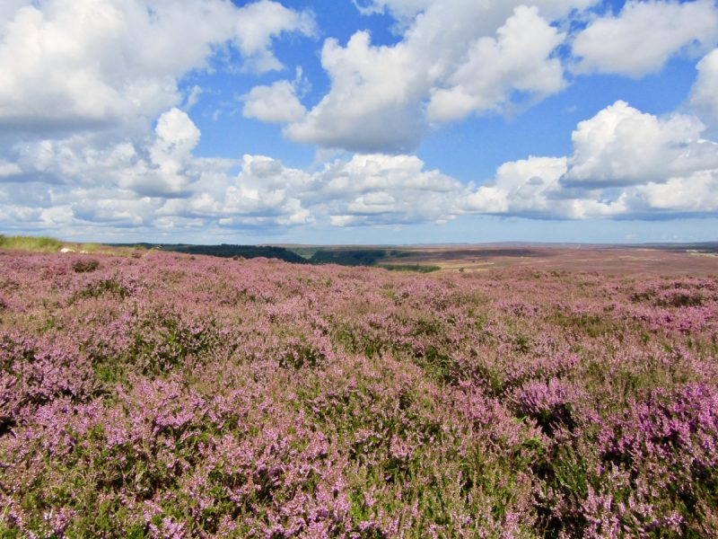 North York Moors - places to visit in the north of england