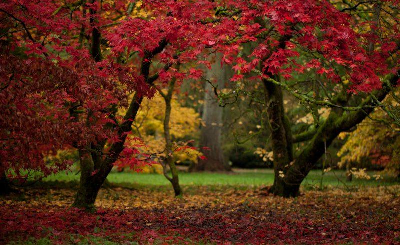 westonbirt arboretumcotswolds england autumn