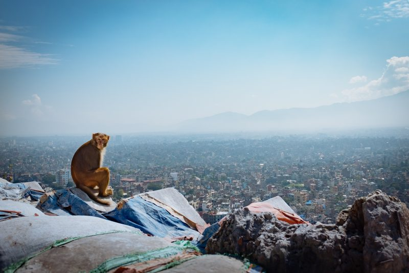 View of Kathmandu from the Swayambhunath Monkey Temple, one of the best places to visit in the city.
