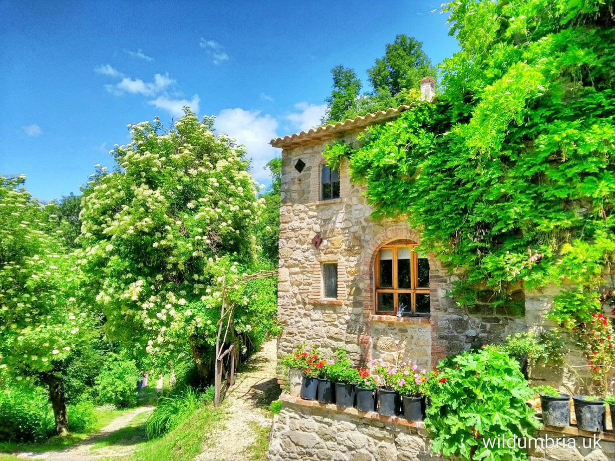 Nature House in Umbria Italy